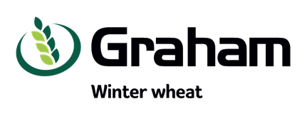 Graham winter wheat