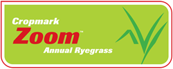 Zoom Annual Ryegrass
