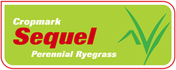 Sequel Enhanced® Perennial Ryegrass