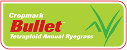 Bullet™ Annual Ryegrass