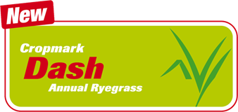 Dash Annual Ryegrass