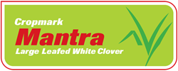 Mantra White Clover (large leafed)