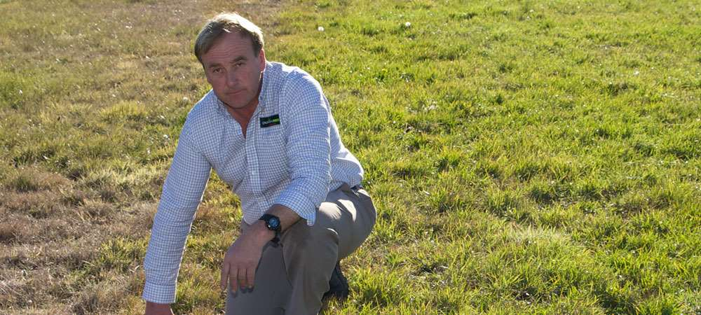 Cropmark Agronomist Richard Moate in a year 3 old pasture persistence trial near Gore