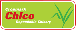 Chico Dependable Chicory
